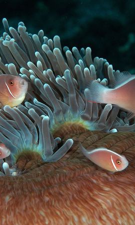 18184 download wallpaper Animals, Fishes screensavers and pictures for free