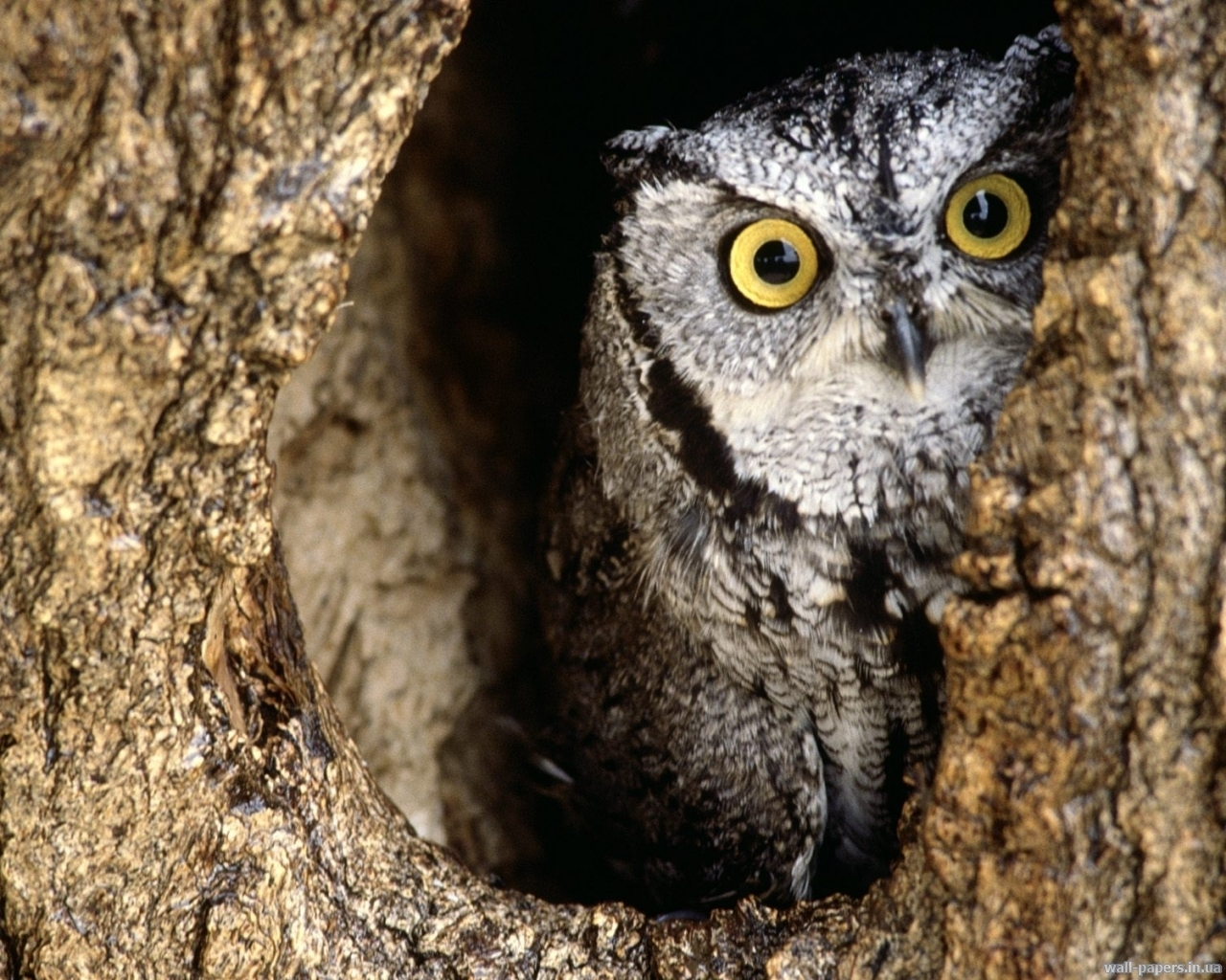 1661 download wallpaper Animals, Birds, Owl screensavers and pictures for free