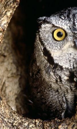 1661 descargar fondo de pantalla Animales, Birds, Búho: protectores de pantalla e imágenes gratis