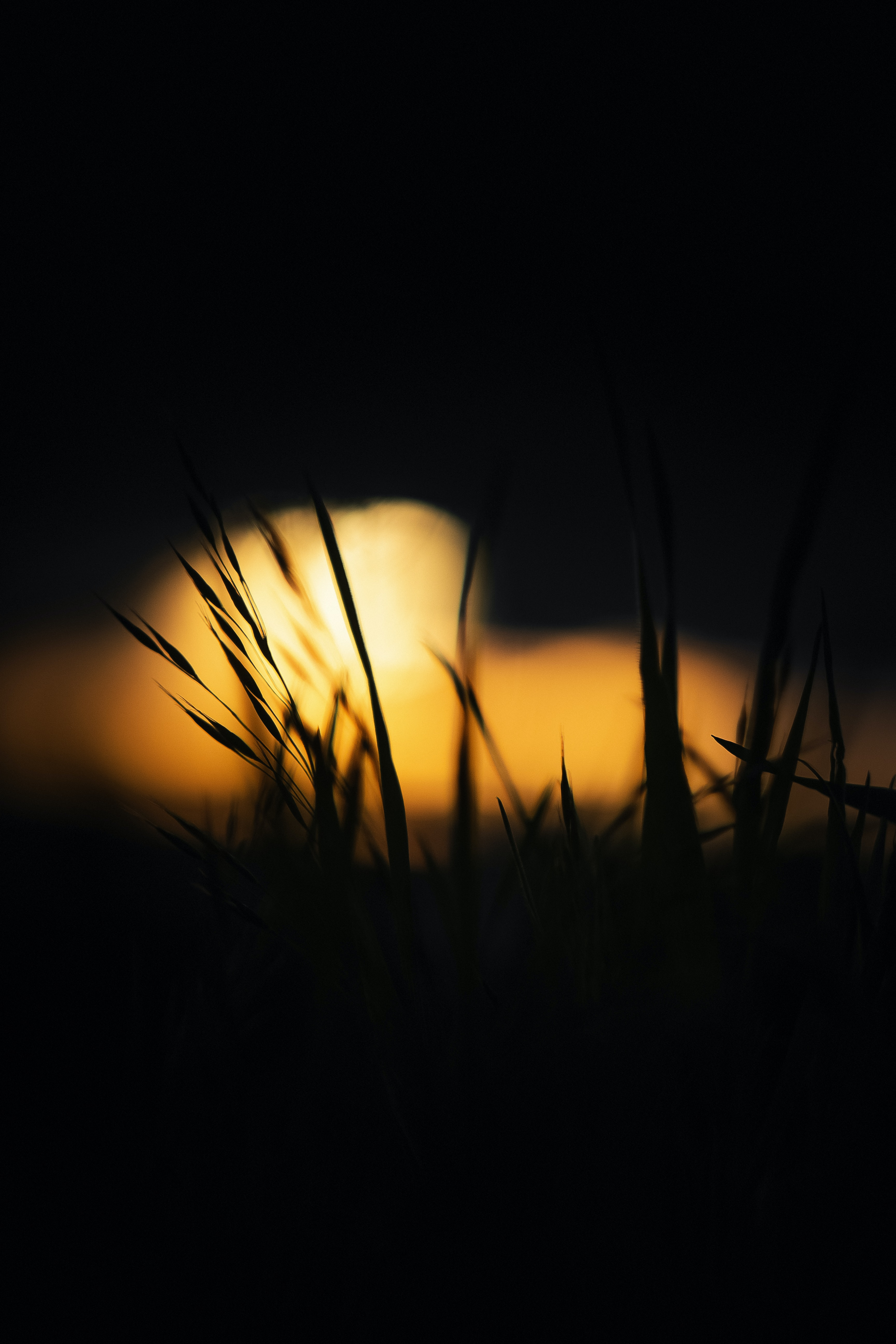 133915 Screensavers and Wallpapers Dark for phone. Download Dark, Grass, Glow pictures for free