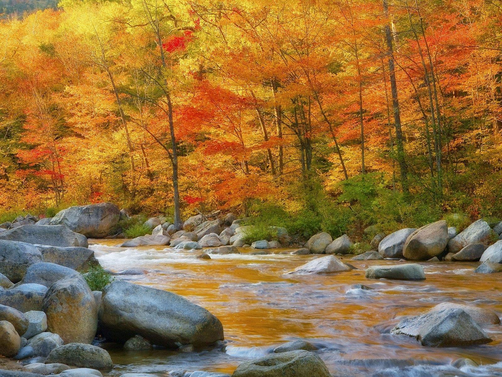 2458 скачать обои Пейзаж, Вода, Река, Деревья, Камни, Осень - заставки и картинки бесплатно