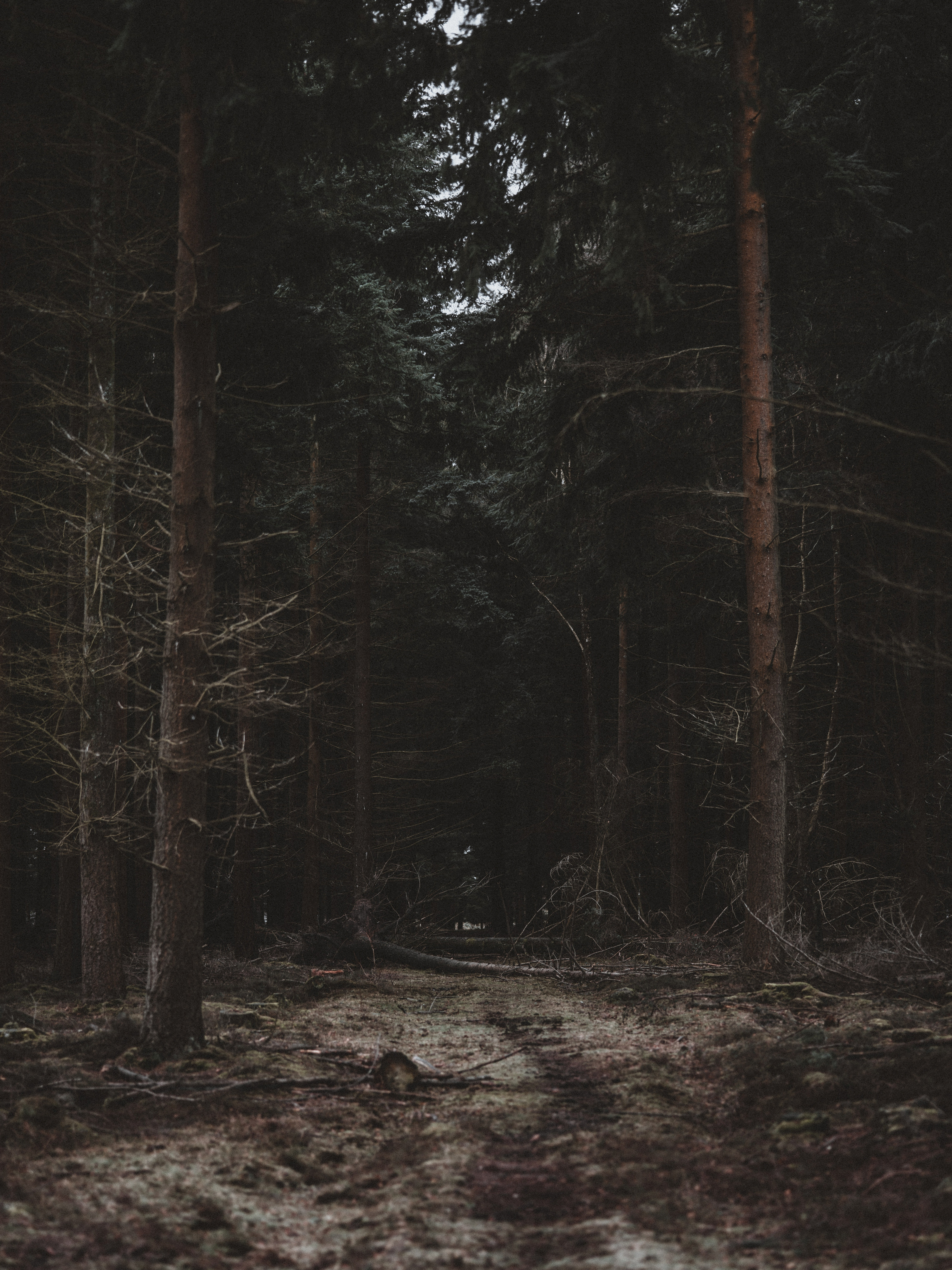 76917 Screensavers and Wallpapers Path for phone. Download Dark, Nature, Trees, Forest, Path pictures for free