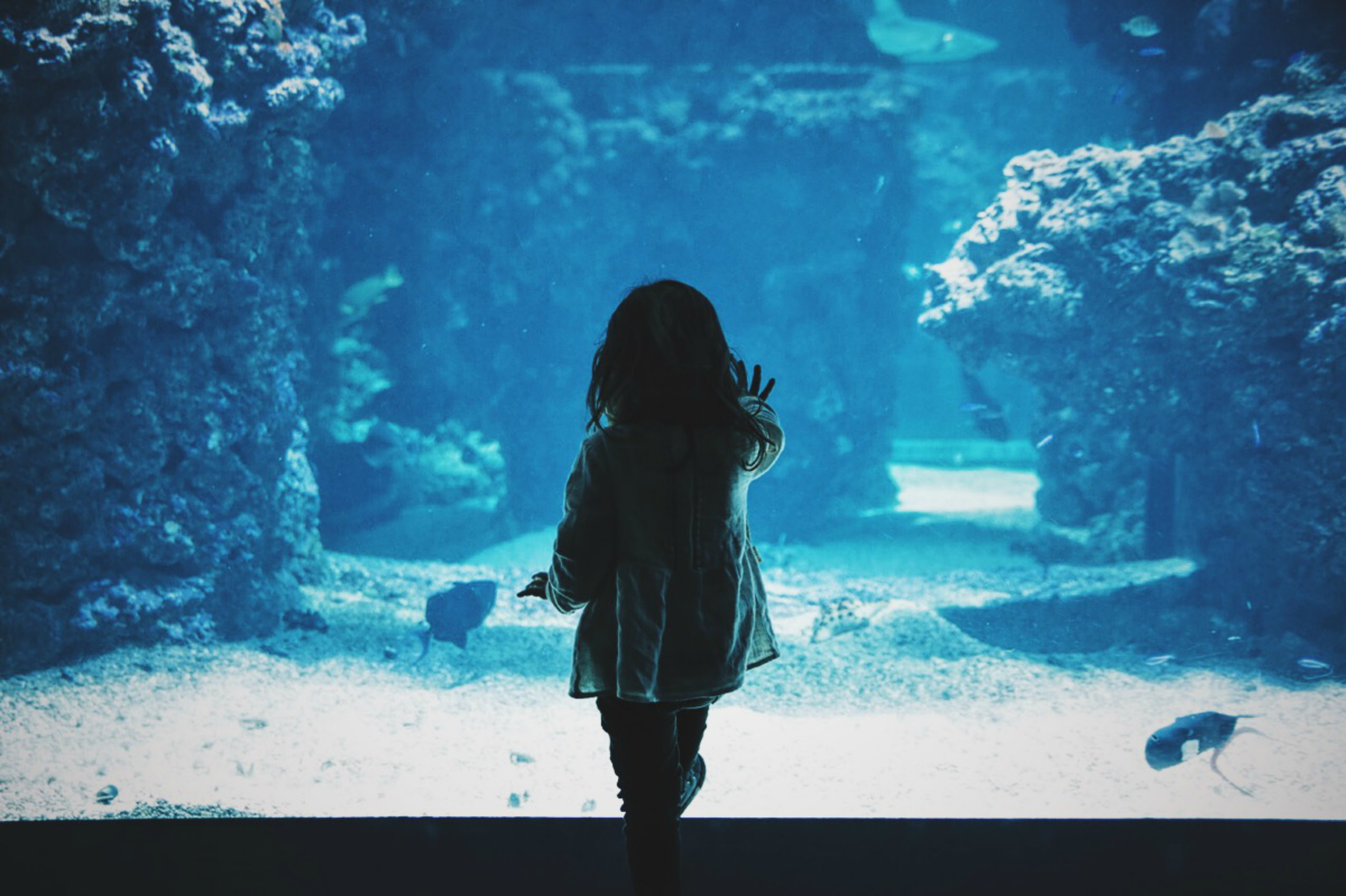 97892 Screensavers and Wallpapers Aquarium for phone. Download Dark, Miscellanea, Miscellaneous, Aquarium, Touching, Touch, Child, Back pictures for free