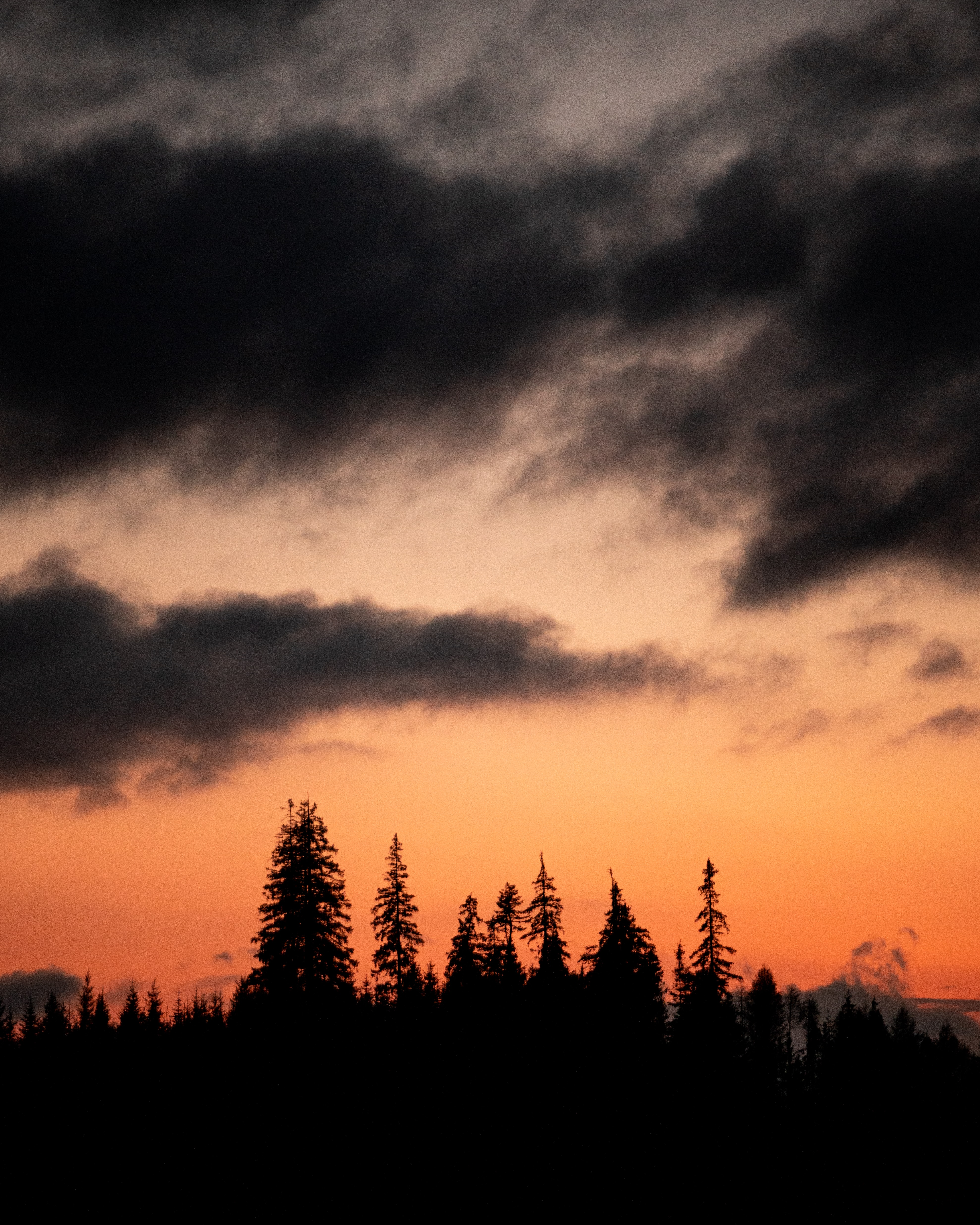 131907 download wallpaper Nature, Trees, Silhouettes, Sunset, Dusk, Twilight screensavers and pictures for free