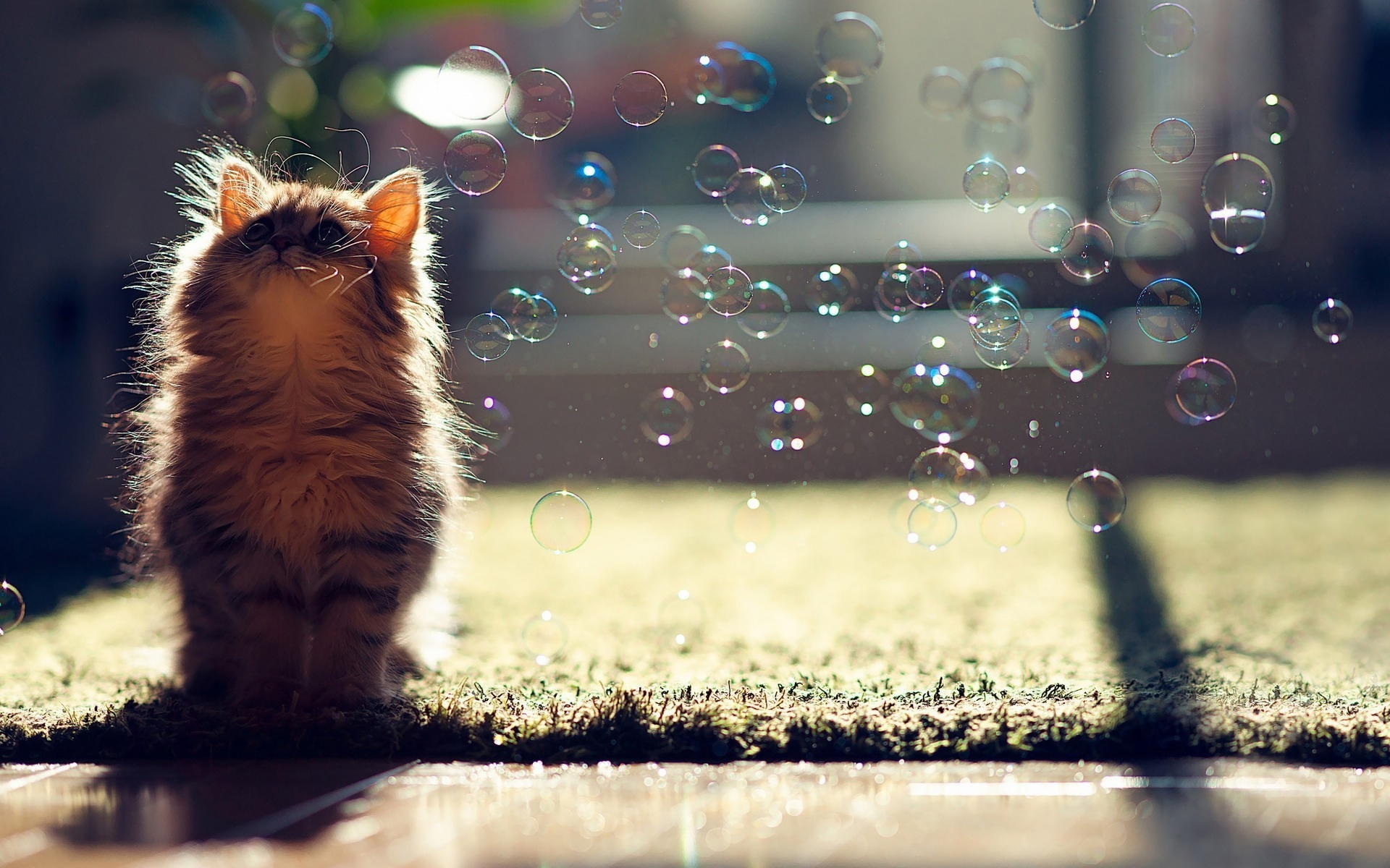 22201 download wallpaper Animals, Cats, Bubbles screensavers and pictures for free