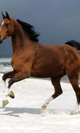 3633 download wallpaper Animals, Horses screensavers and pictures for free