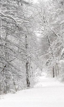 124095携帯電話用の白壁紙を無料でダウンロード、自然, 森林, 森, 冬, 雪, 木, パノラマ, 白い 白写真と携帯電話用スクリーンセーバー