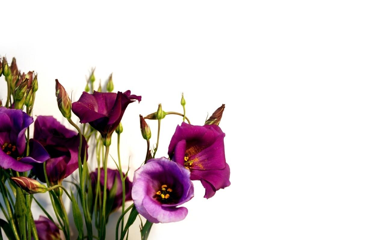 12469 скачать обои Растения, Цветы - заставки и картинки бесплатно