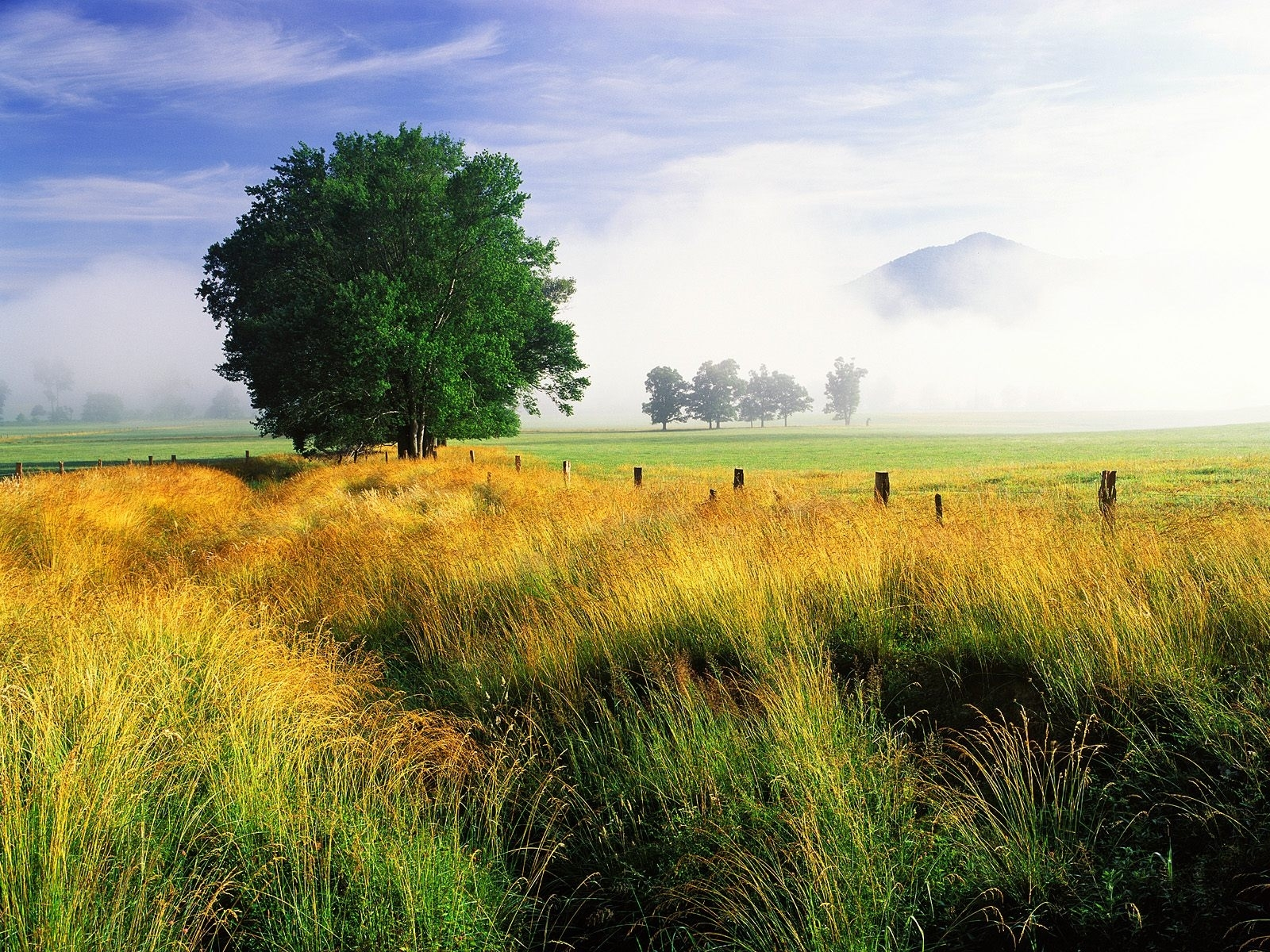 3295 скачать обои Пейзаж, Деревья, Трава, Небо - заставки и картинки бесплатно