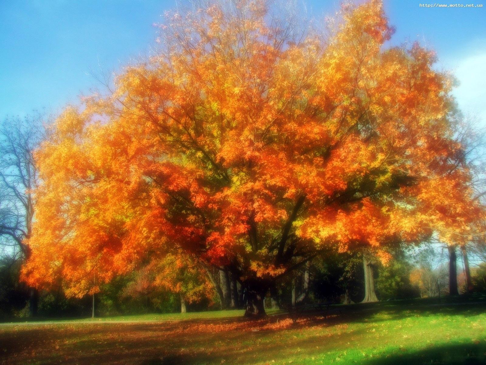 5599 скачать обои Пейзаж, Деревья, Осень - заставки и картинки бесплатно