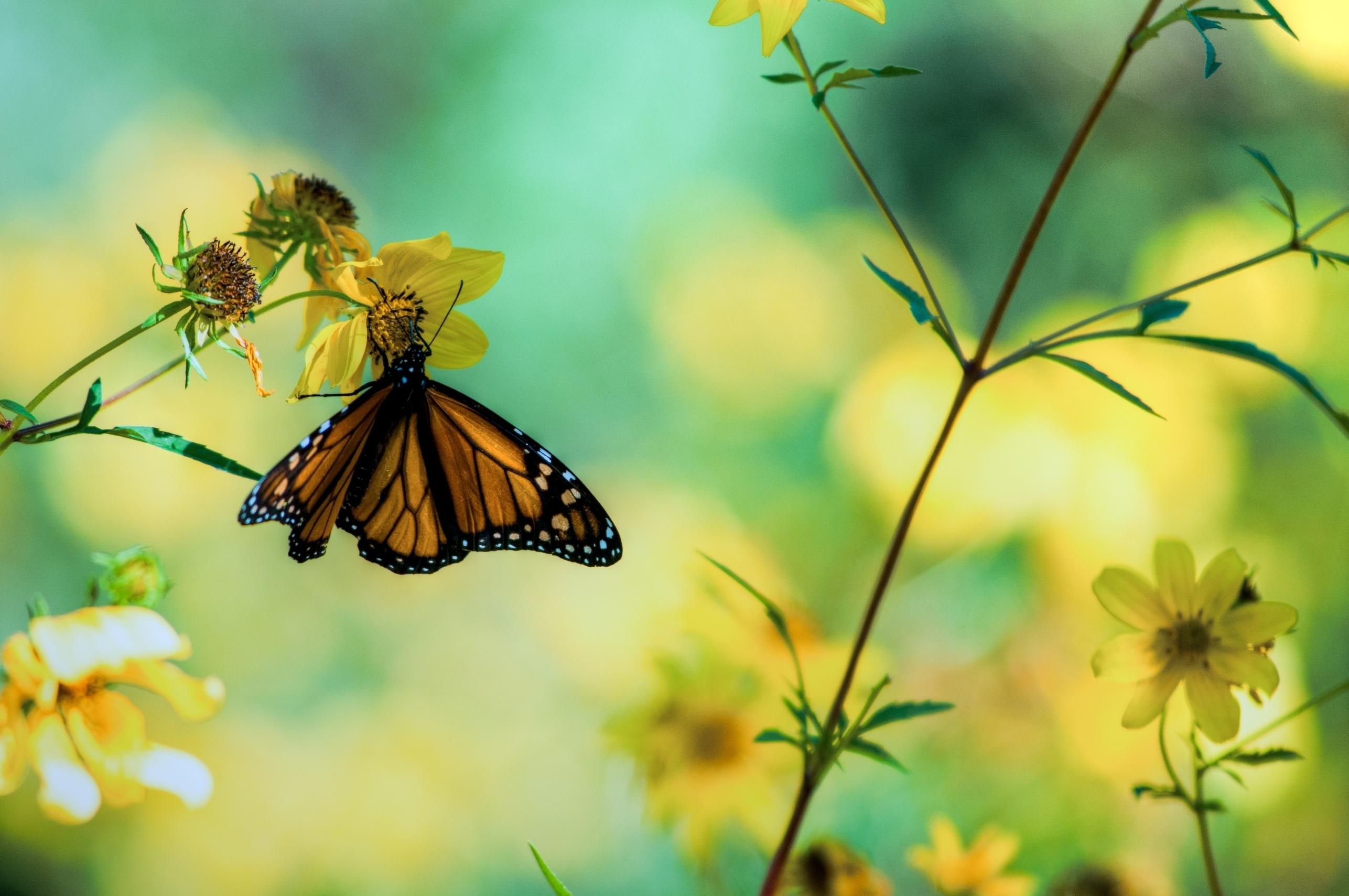 116352 télécharger le fond d'écran Macro, Papillon, Plantes, Fleurs - économiseurs d'écran et images gratuitement