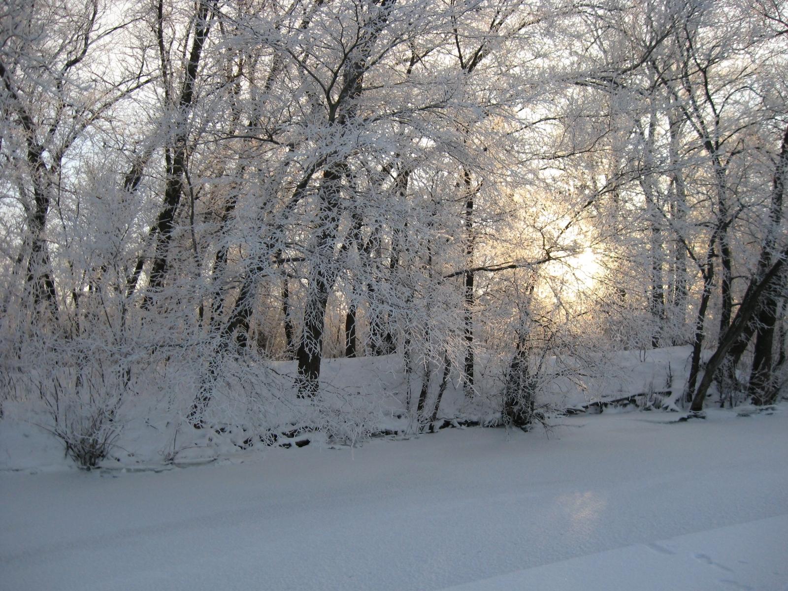 2480 скачать обои Пейзаж, Зима, Деревья, Снег - заставки и картинки бесплатно