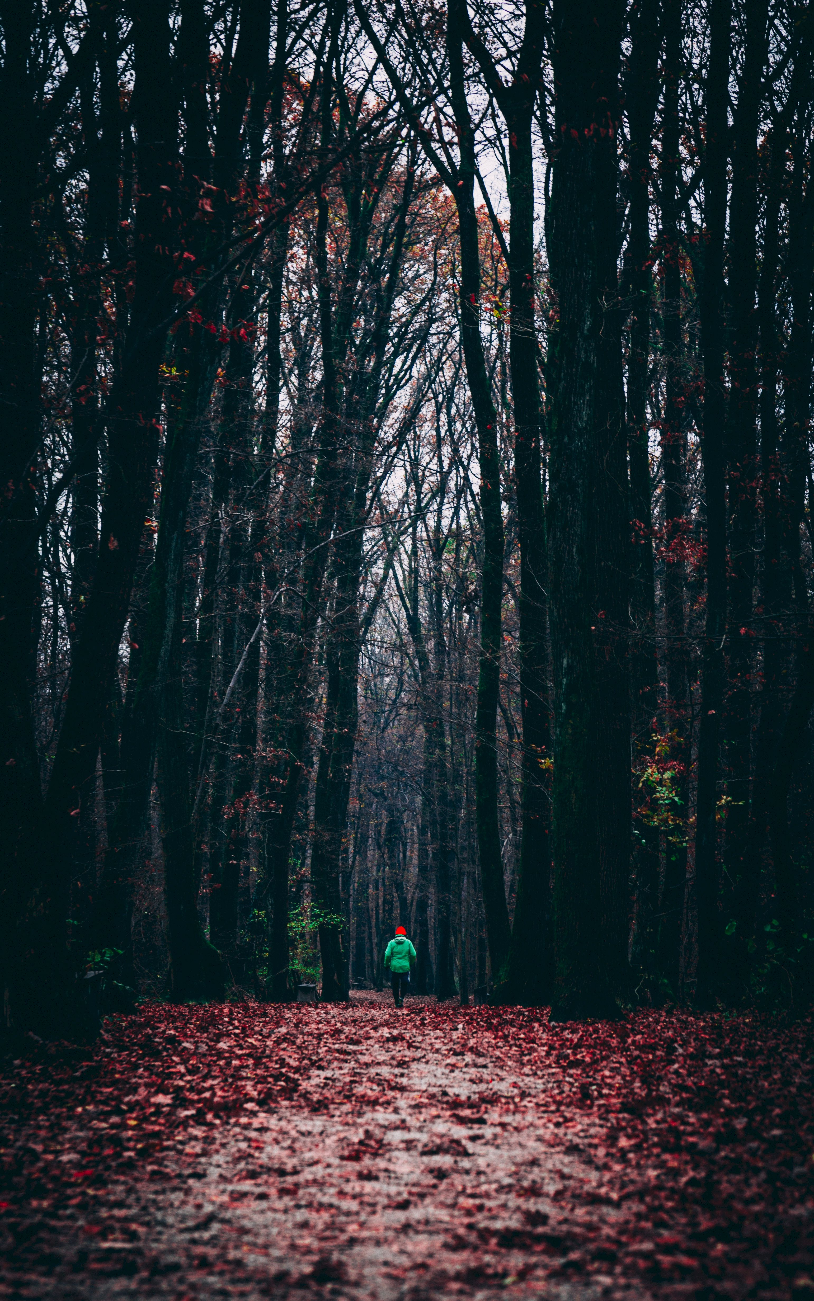 134305 Screensavers and Wallpapers Human for phone. Download Nature, Autumn, Forest, Foliage, Human, Person, Alone, Lonely, Run, Running pictures for free