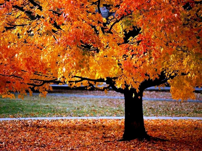 33685 download wallpaper Landscape, Trees, Autumn screensavers and pictures for free