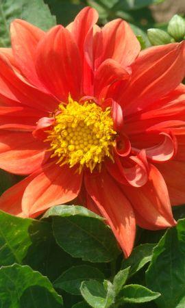 44482 télécharger le fond d'écran Plantes, Fleurs - économiseurs d'écran et images gratuitement