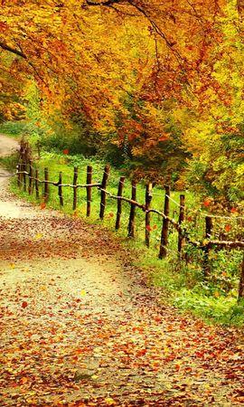 15641 скачать обои Пейзаж, Дороги, Осень, Листья - заставки и картинки бесплатно