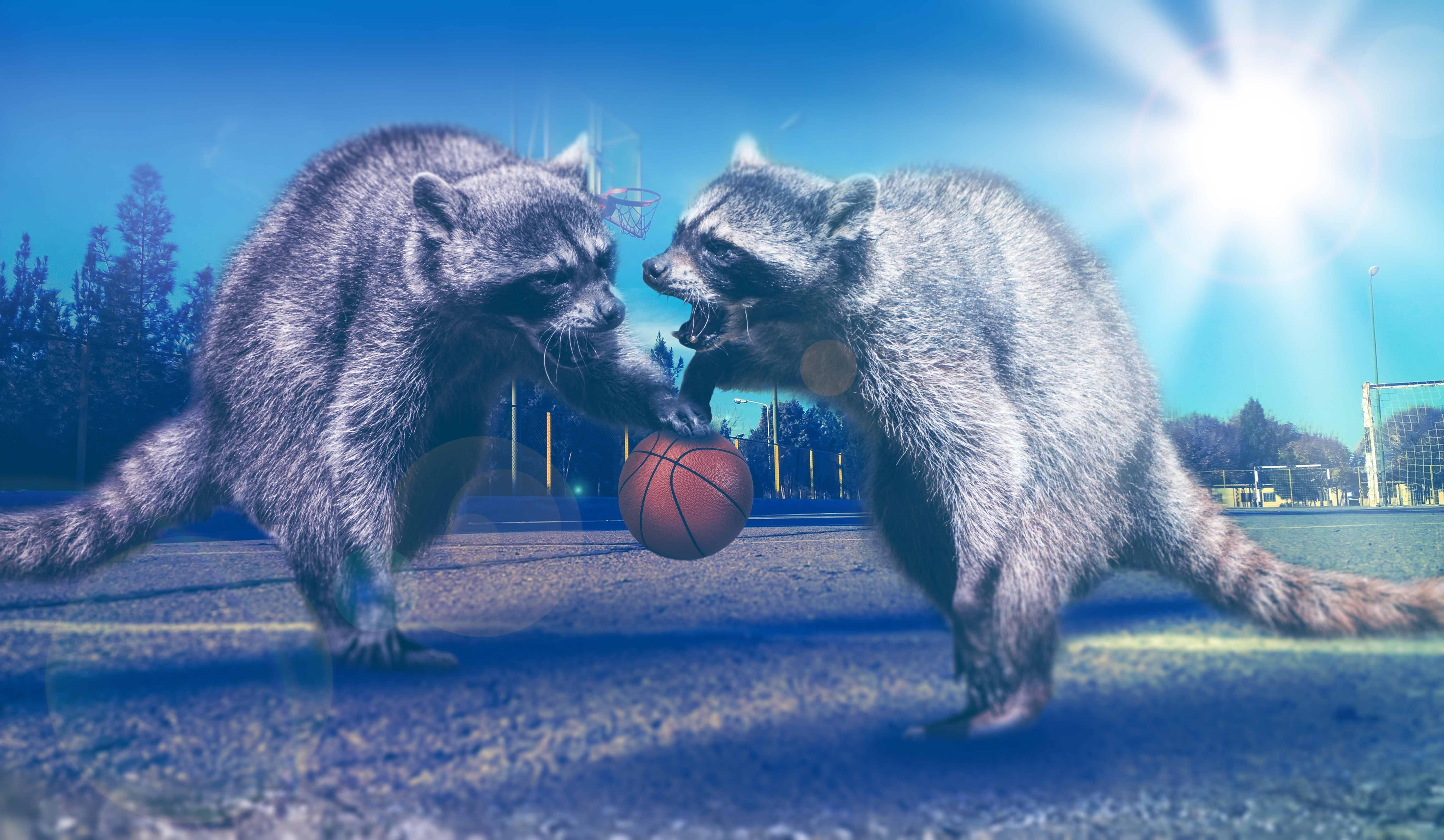 54489 download wallpaper Animals, Basketball, Raccoons, Photoshop screensavers and pictures for free