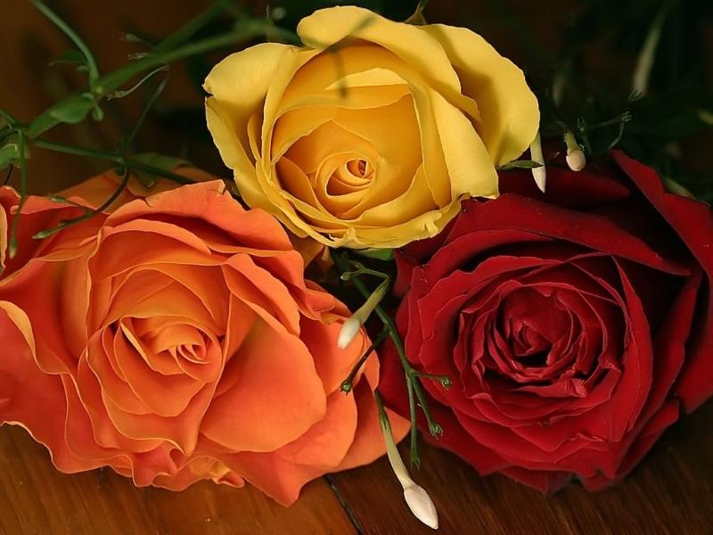 45997 скачать обои Растения, Цветы, Розы - заставки и картинки бесплатно