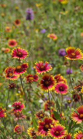 43114 télécharger le fond d'écran Plantes, Paysage, Fleurs - économiseurs d'écran et images gratuitement