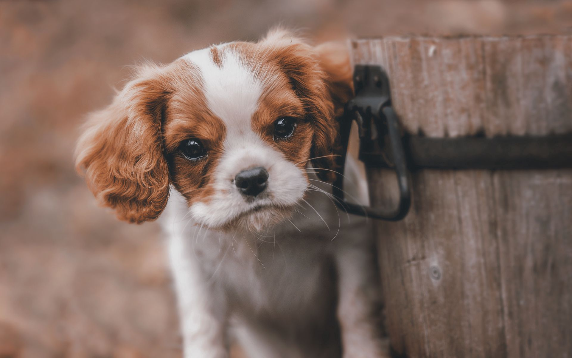 124525 Screensavers and Wallpapers Puppy for phone. Download Animals, Dog, Sight, Opinion, Puppy, Bucket pictures for free