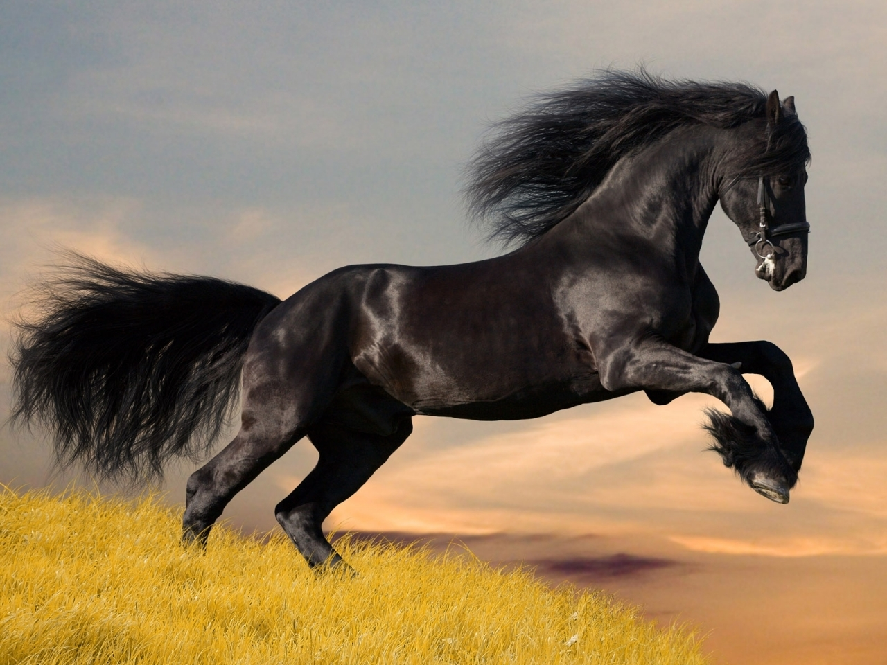 9988 download wallpaper Animals, Horses screensavers and pictures for free