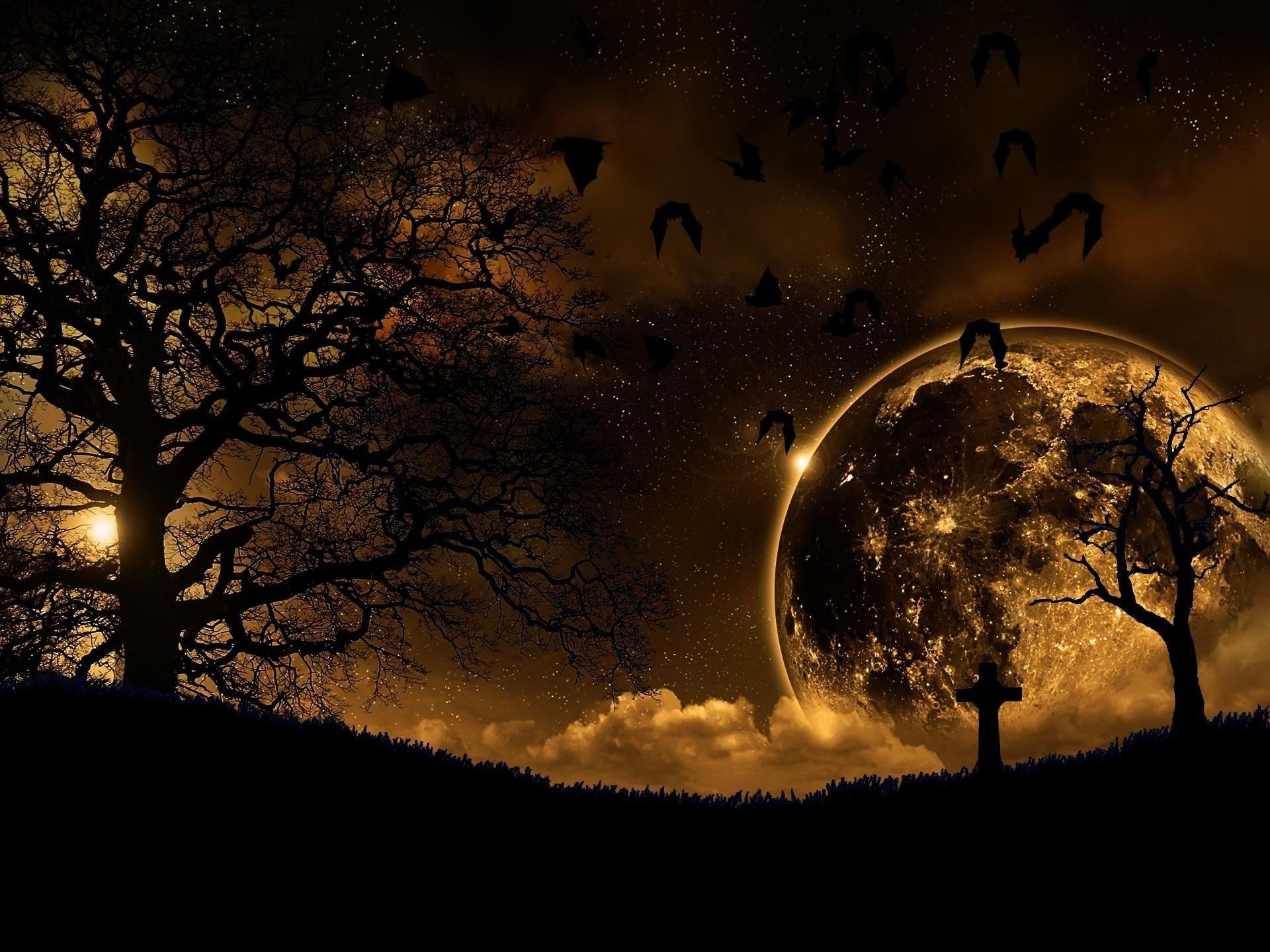 83118 скачать обои Темные, Ночь, Пейзаж, Природа, Птицы, Деревья, Планета - заставки и картинки бесплатно