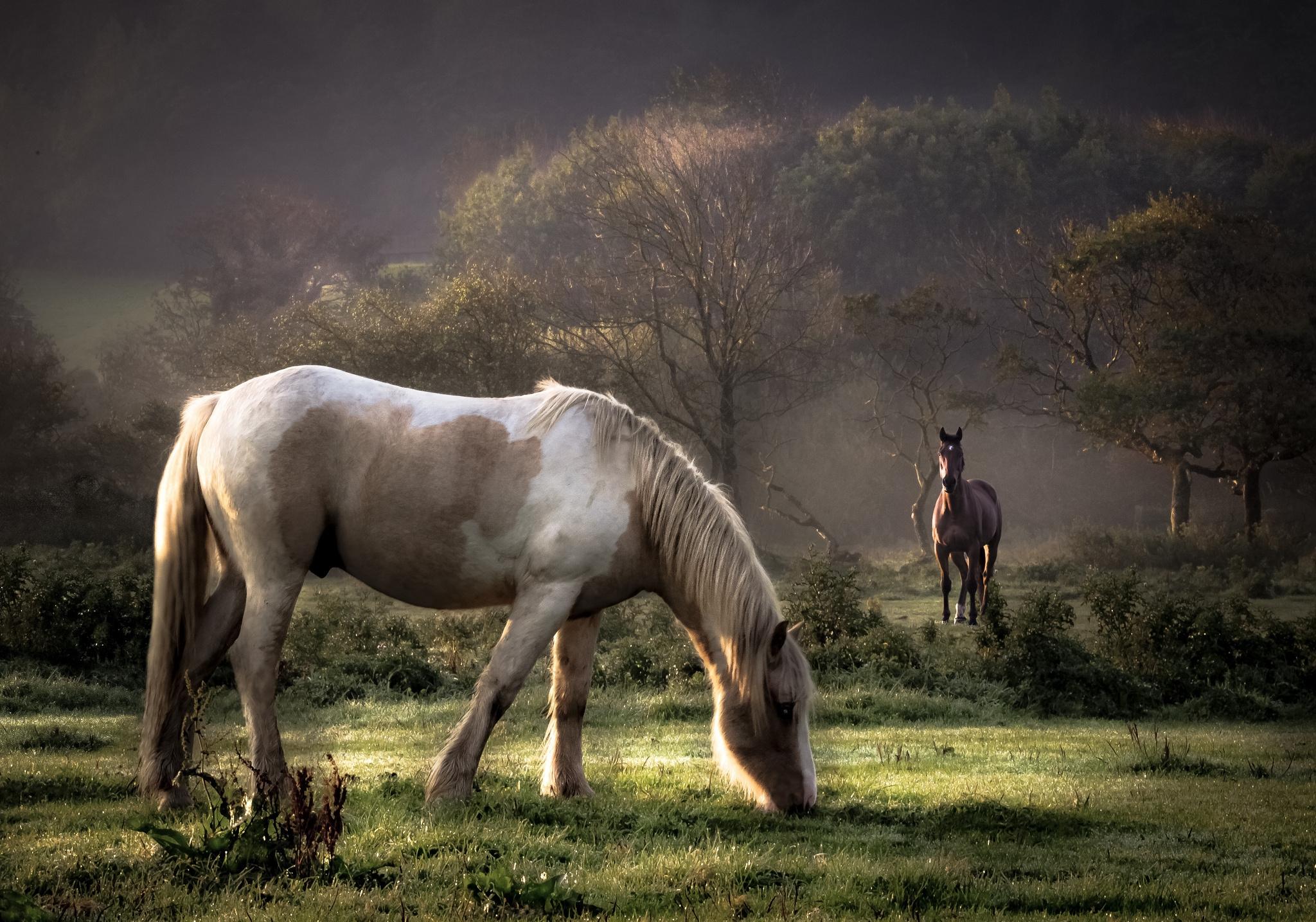 102250 Protetores de tela e papéis de parede Cavalos em seu telefone. Baixe Cavalos, Animais, Árvores, Comida, Grama, Casal, Par, Passeio, Passear fotos gratuitamente