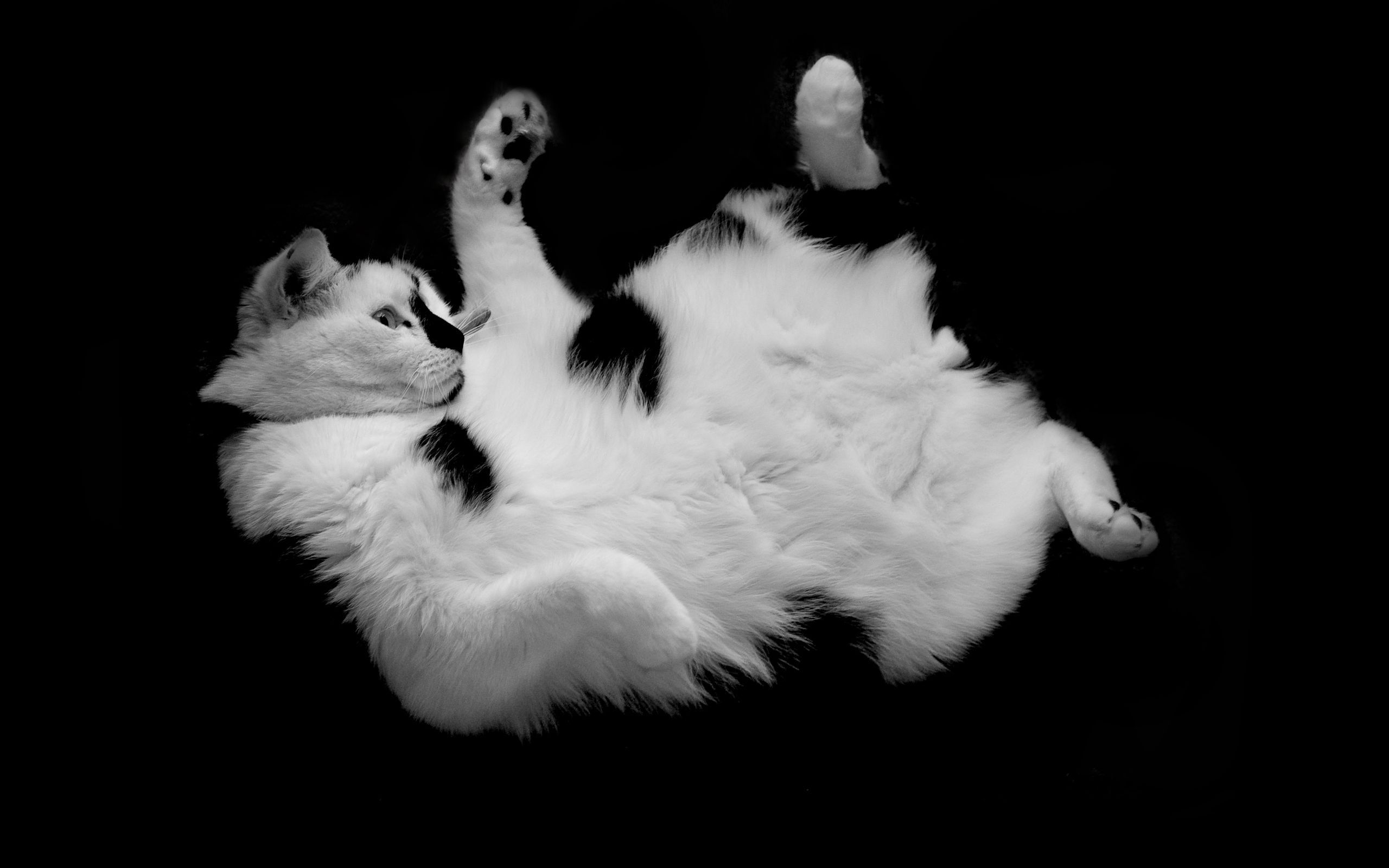 64331 download wallpaper Animals, Cat, Spotted, Spotty, To Lie Down, Lie, Playful, Nice, Sweetheart screensavers and pictures for free