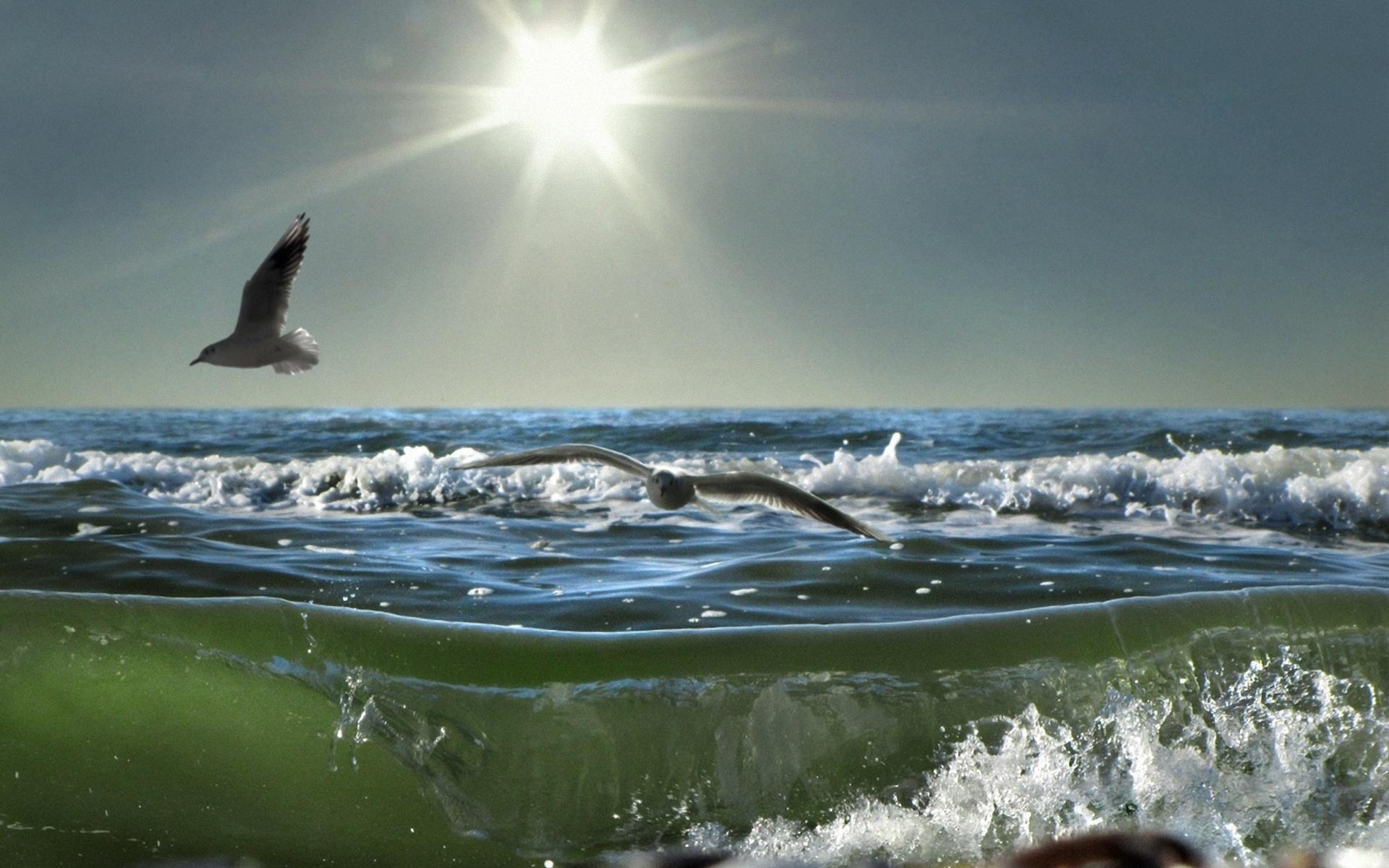 21610 скачать обои Животные, Пейзаж, Птицы, Море, Солнце, Чайки, Волны - заставки и картинки бесплатно