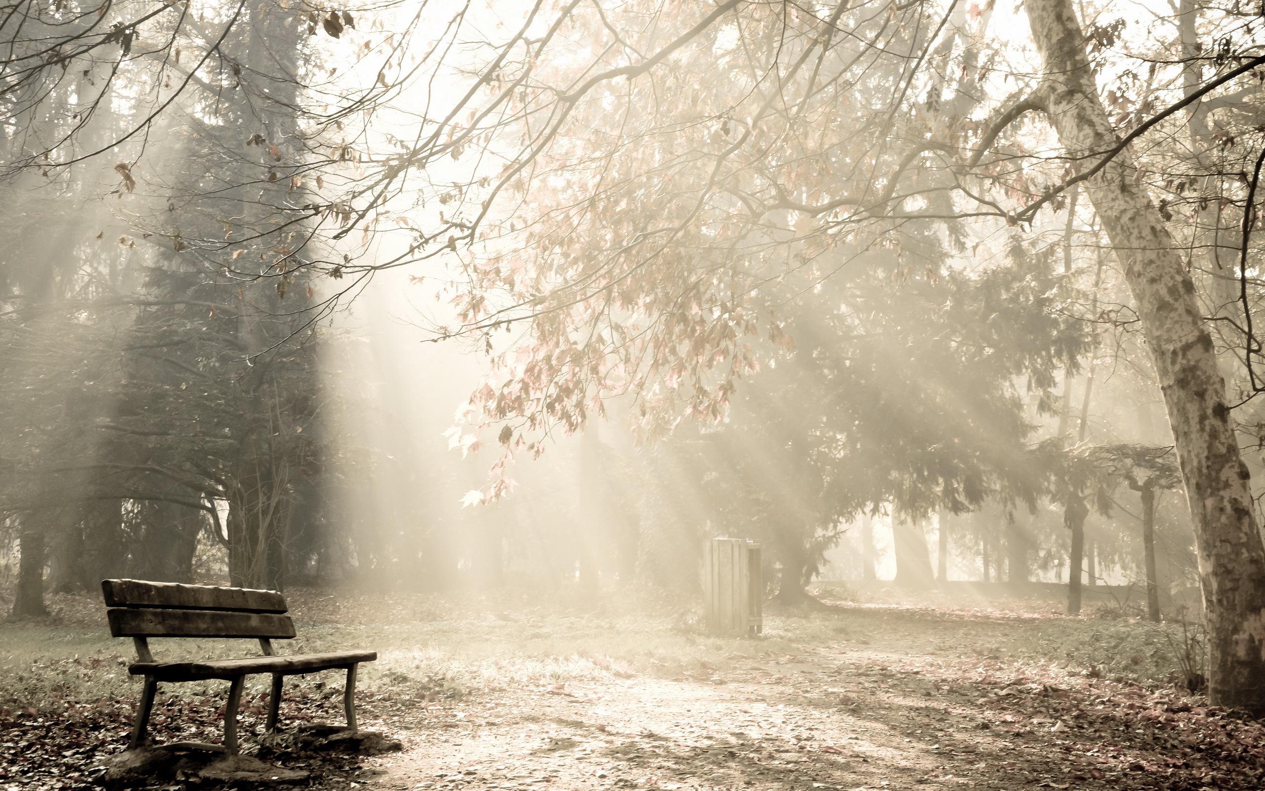 26171 скачать обои Пейзаж, Деревья, Солнце - заставки и картинки бесплатно