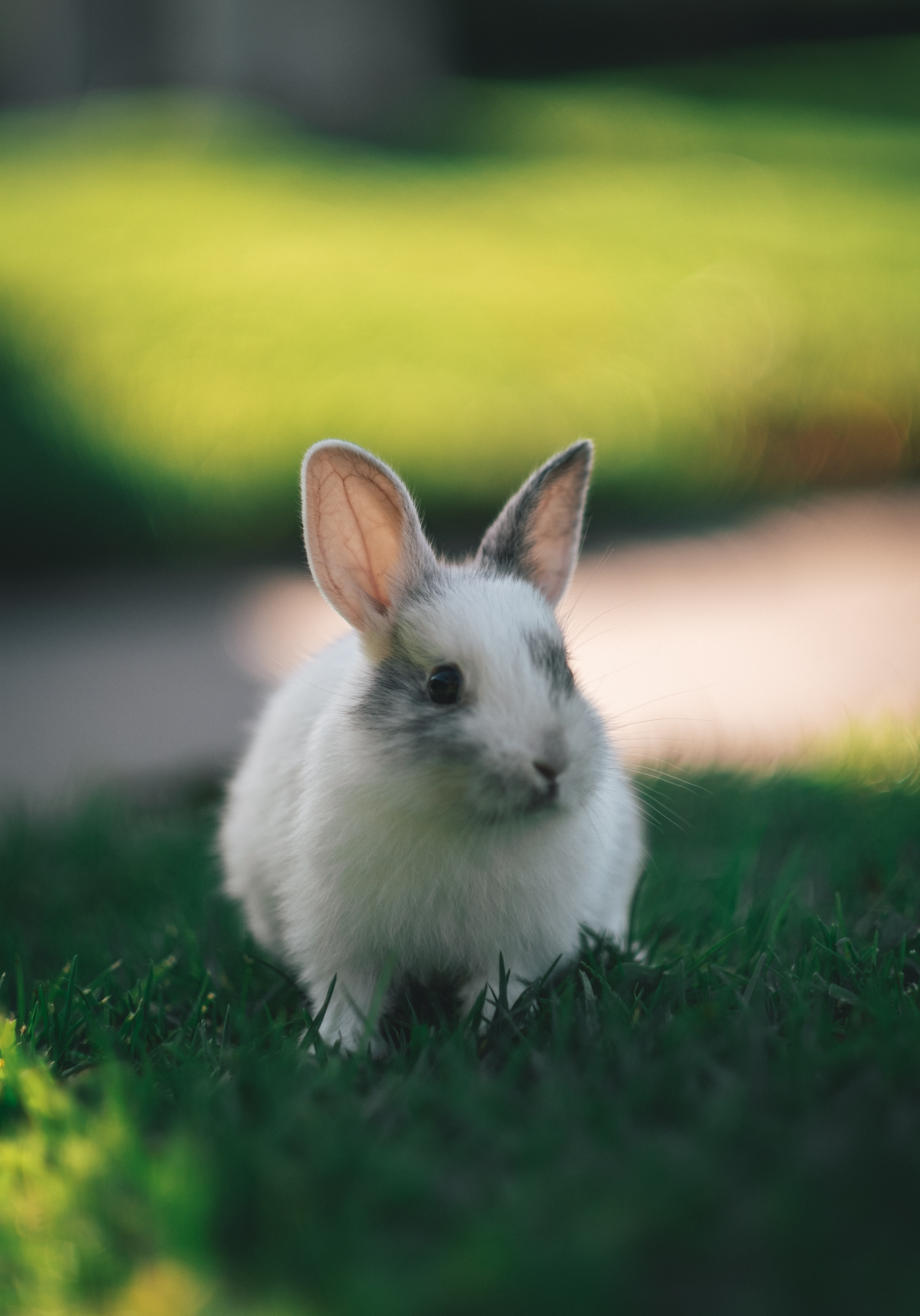 144099 download wallpaper Animals, Rabbit, Nice, Sweetheart, Fluffy, Grass screensavers and pictures for free