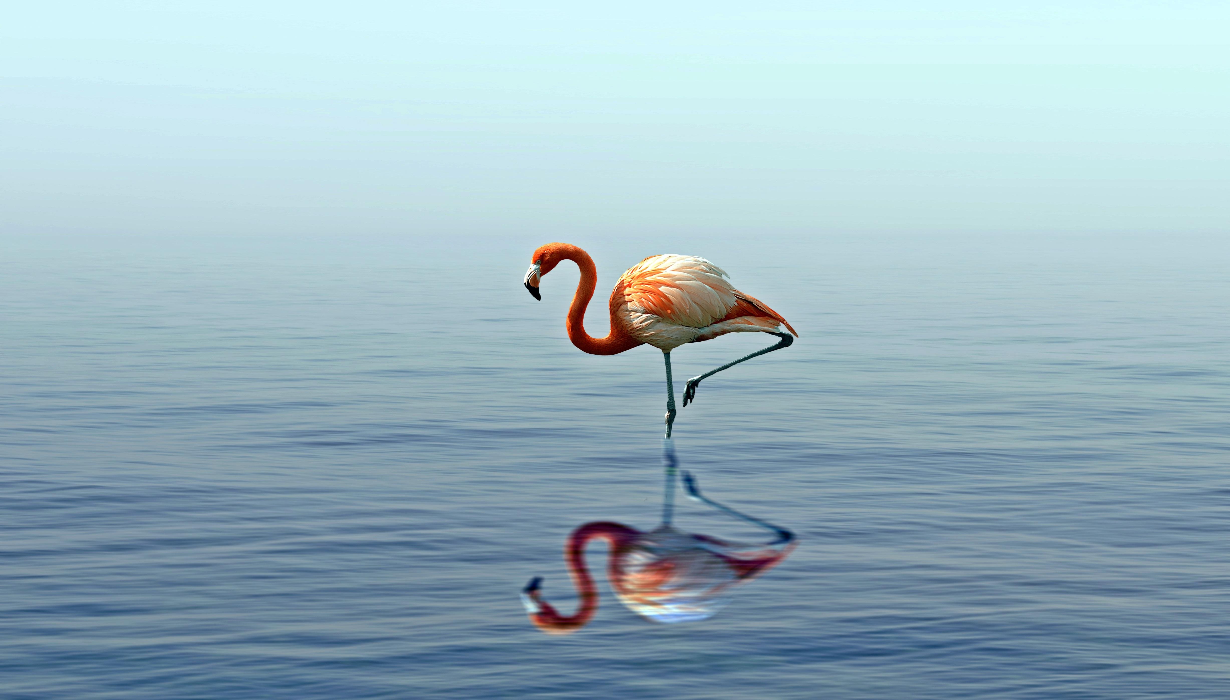 92482 Заставки и Обои Вода на телефон. Скачать Вода, Животные, Птица, Фламинго, Озеро, Отражение, Стоит картинки бесплатно