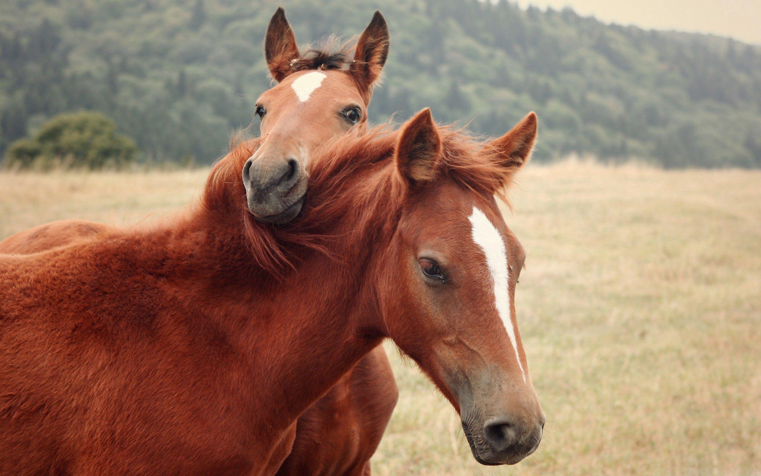 92825 скачать обои Животные, Лошади, Пара, Трава, Природа - заставки и картинки бесплатно