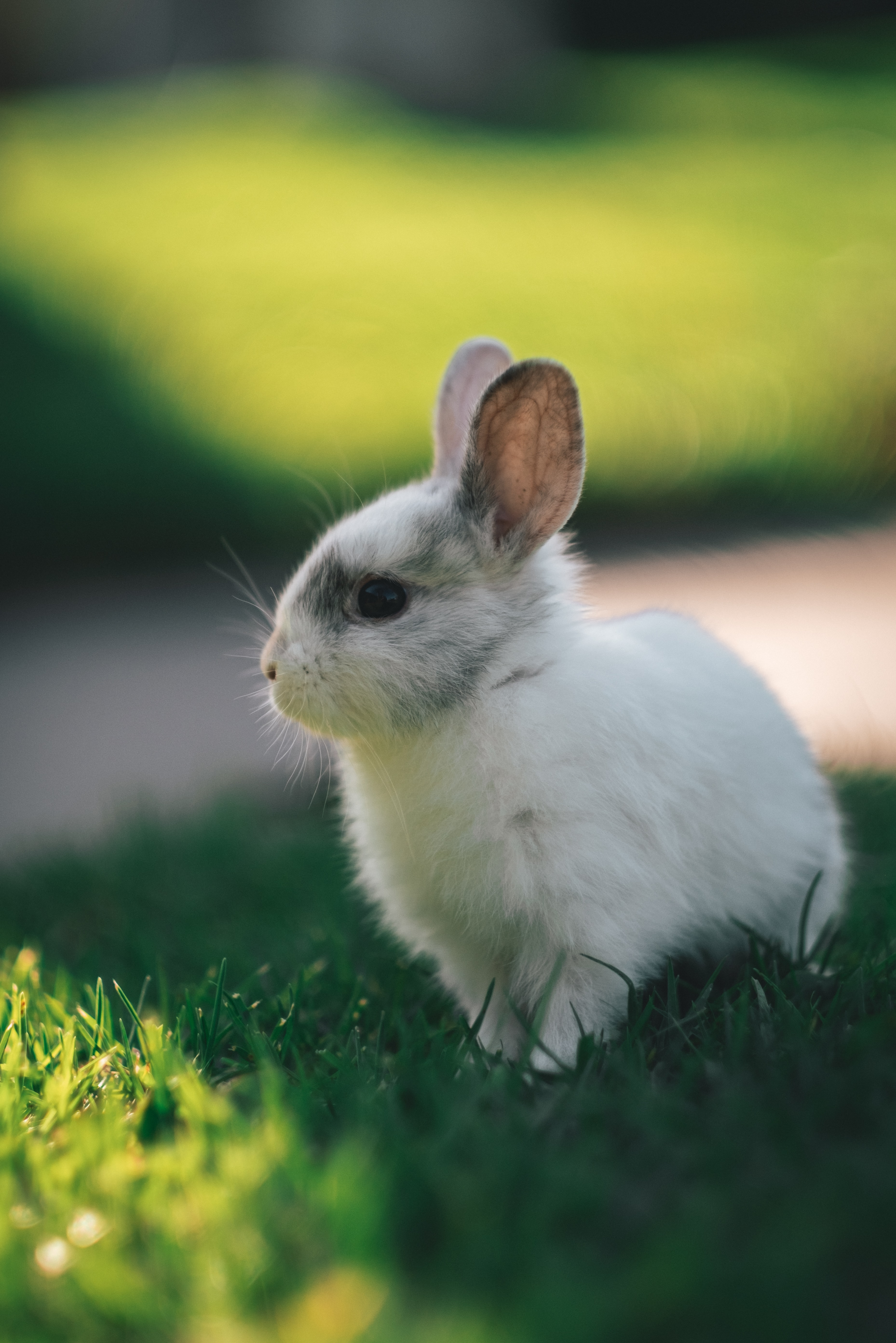 93113 download wallpaper Animals, Rabbit, Profile, Animal, Nice, Sweetheart screensavers and pictures for free