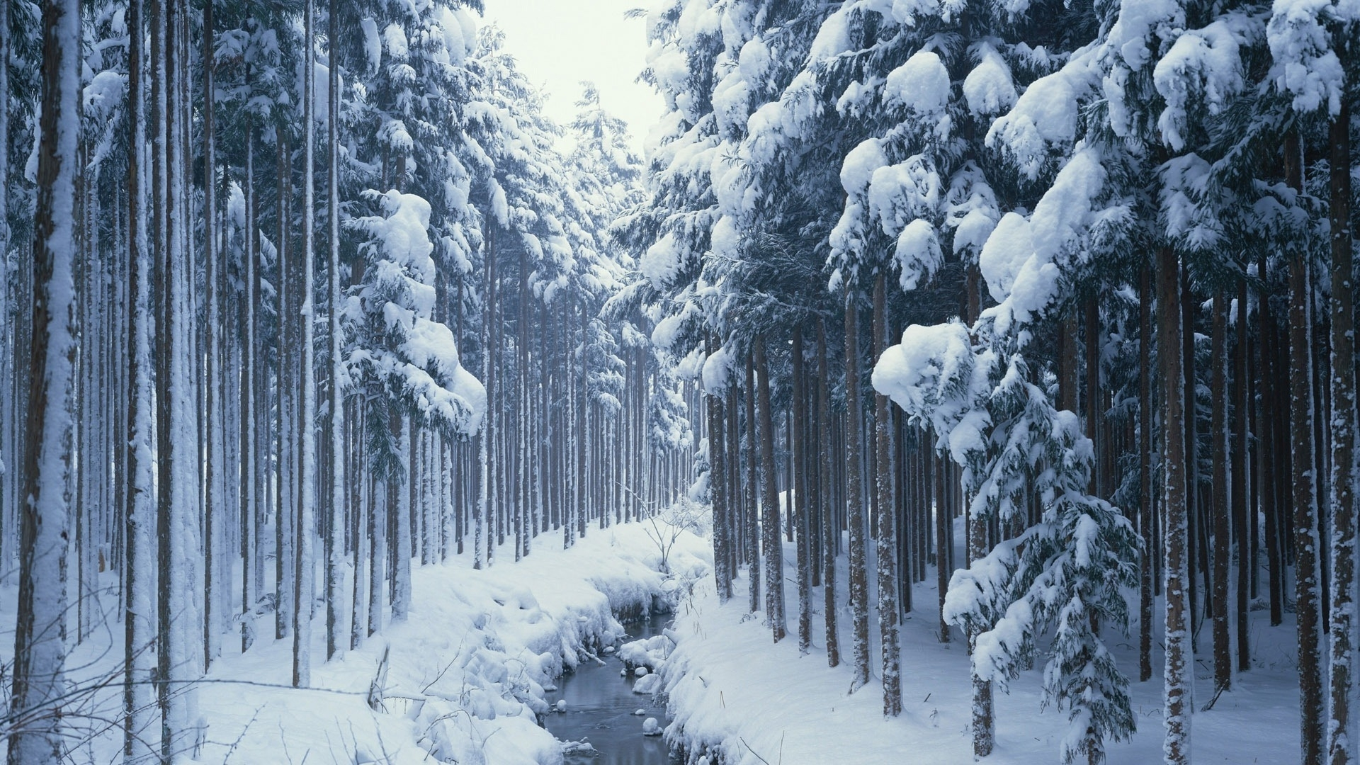 27442 скачать обои Пейзаж, Зима, Река, Деревья, Снег - заставки и картинки бесплатно