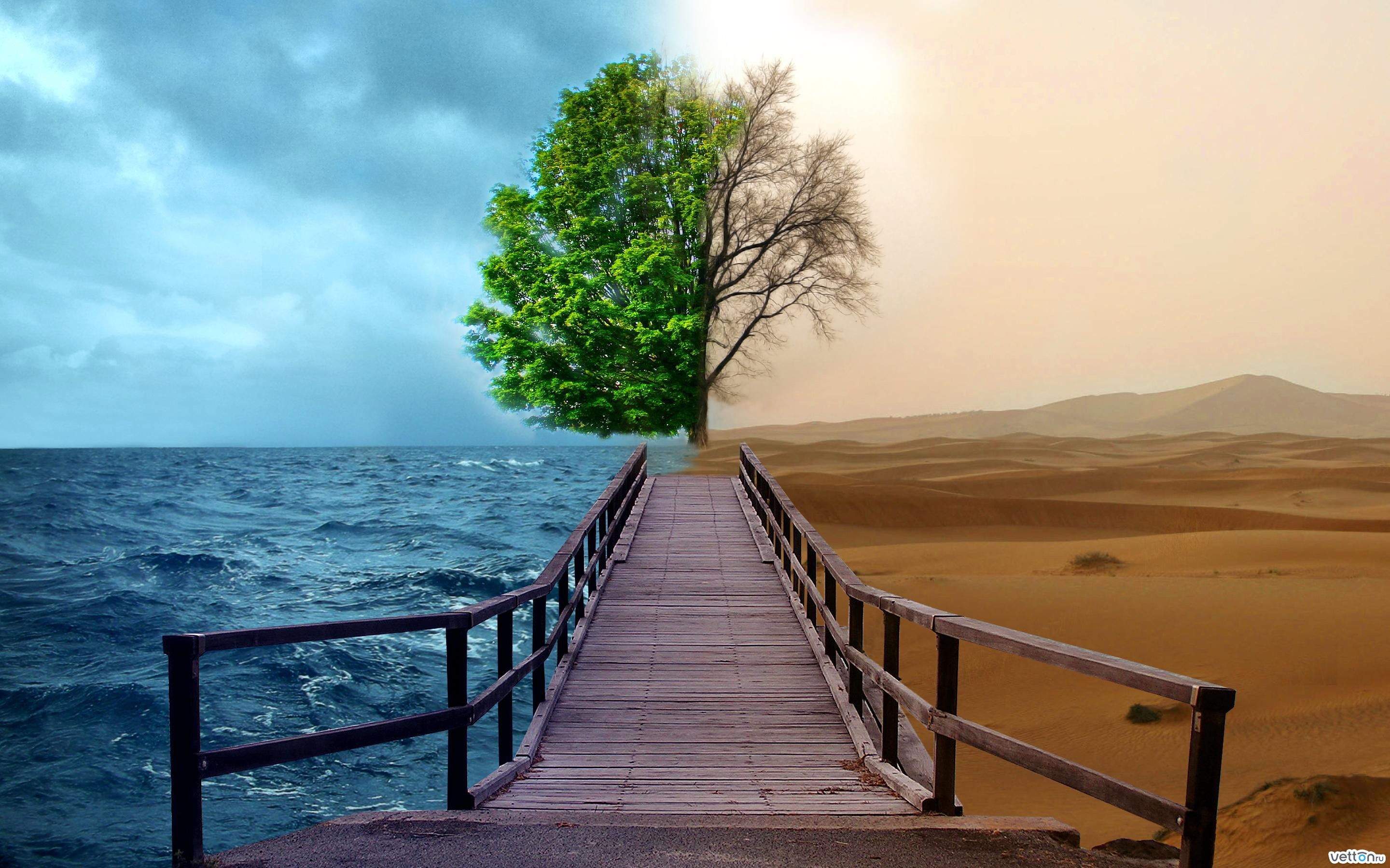 20876 download wallpaper Landscape, Trees, Sea, Desert screensavers and pictures for free