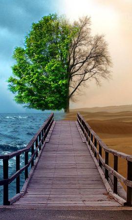 20876 скачать обои Пейзаж, Деревья, Море, Пустыня - заставки и картинки бесплатно