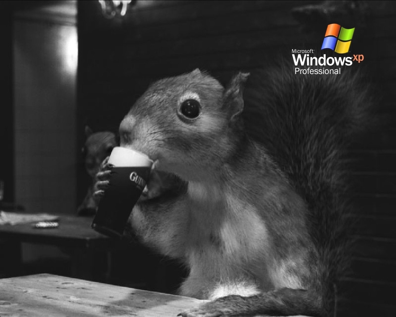4496 download wallpaper Funny, Animals, Squirrel, Rodents, Beer screensavers and pictures for free