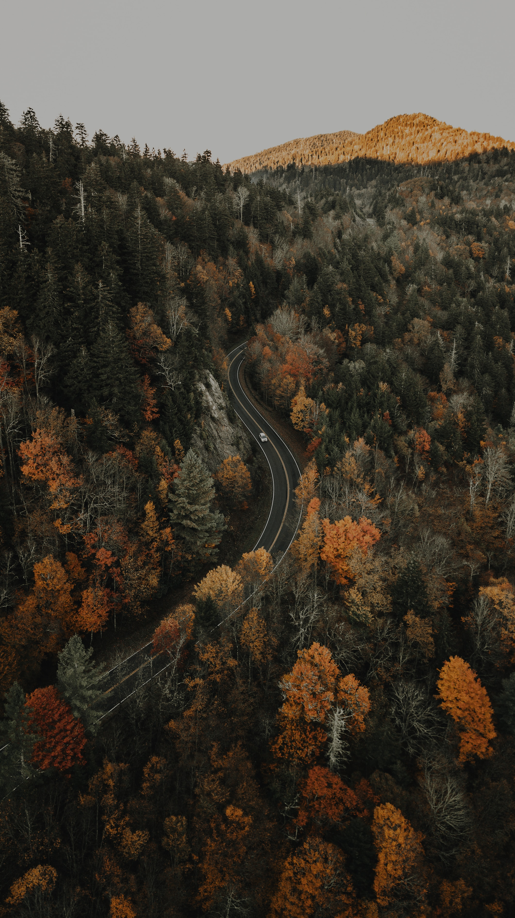 153964 fond d'écran 1080x2400 sur votre téléphone gratuitement, téléchargez des images Nature, Vue D'en-Haut, Vue D'En Haut, Route, Forêt, Aperçu, Révision, Hauteur 1080x2400 sur votre mobile