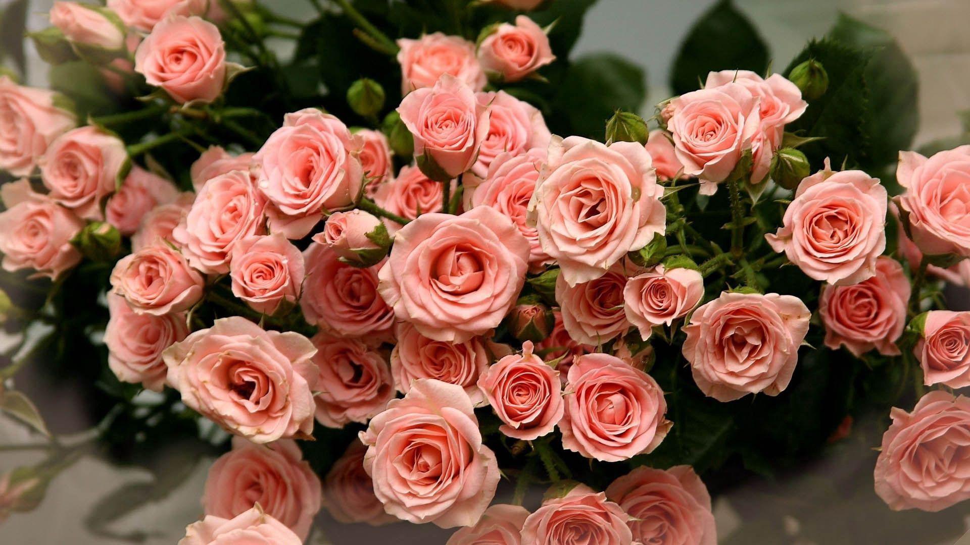 75927 скачать обои Цветы, Розовый, Лепестки, Букет, Розы - заставки и картинки бесплатно