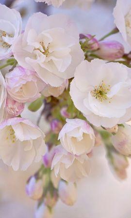 19717 скачать обои Растения, Цветы - заставки и картинки бесплатно
