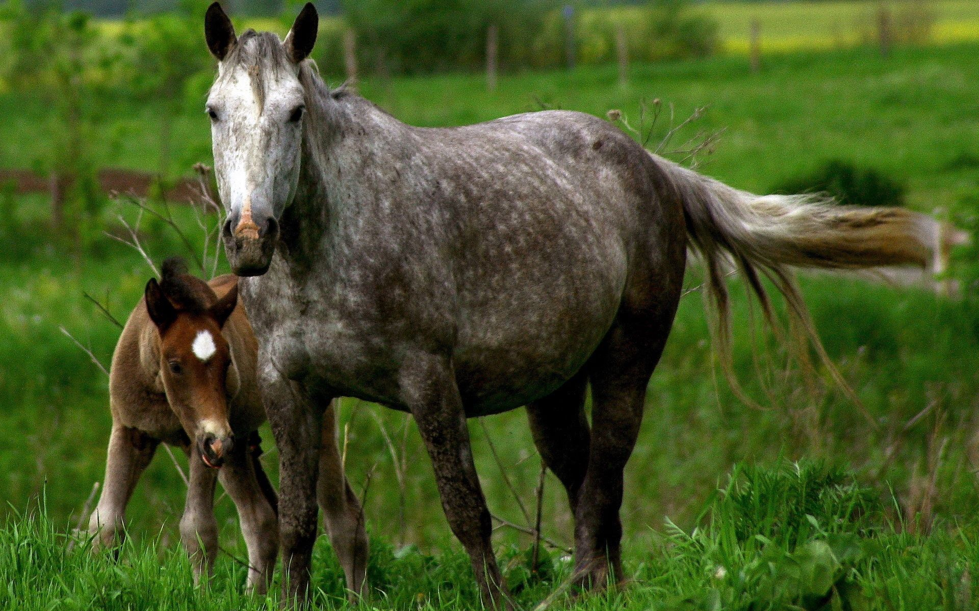 73096 Screensavers and Wallpapers Young for phone. Download Animals, Grass, Young, Couple, Pair, Care, Joey, Horse, Stallion pictures for free