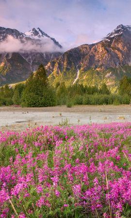 28074 скачать обои Пейзаж, Цветы, Горы - заставки и картинки бесплатно