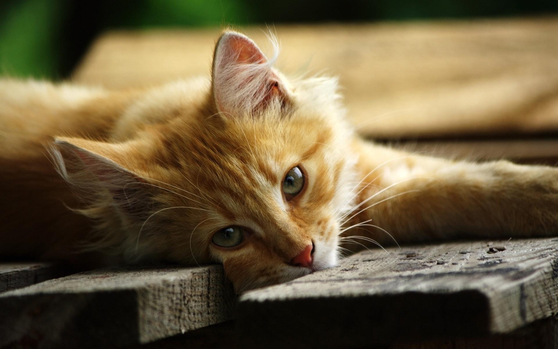 31950 обои 720x1520 на телефон бесплатно, скачать картинки Кошки (Коты, Котики), Животные 720x1520 на мобильный