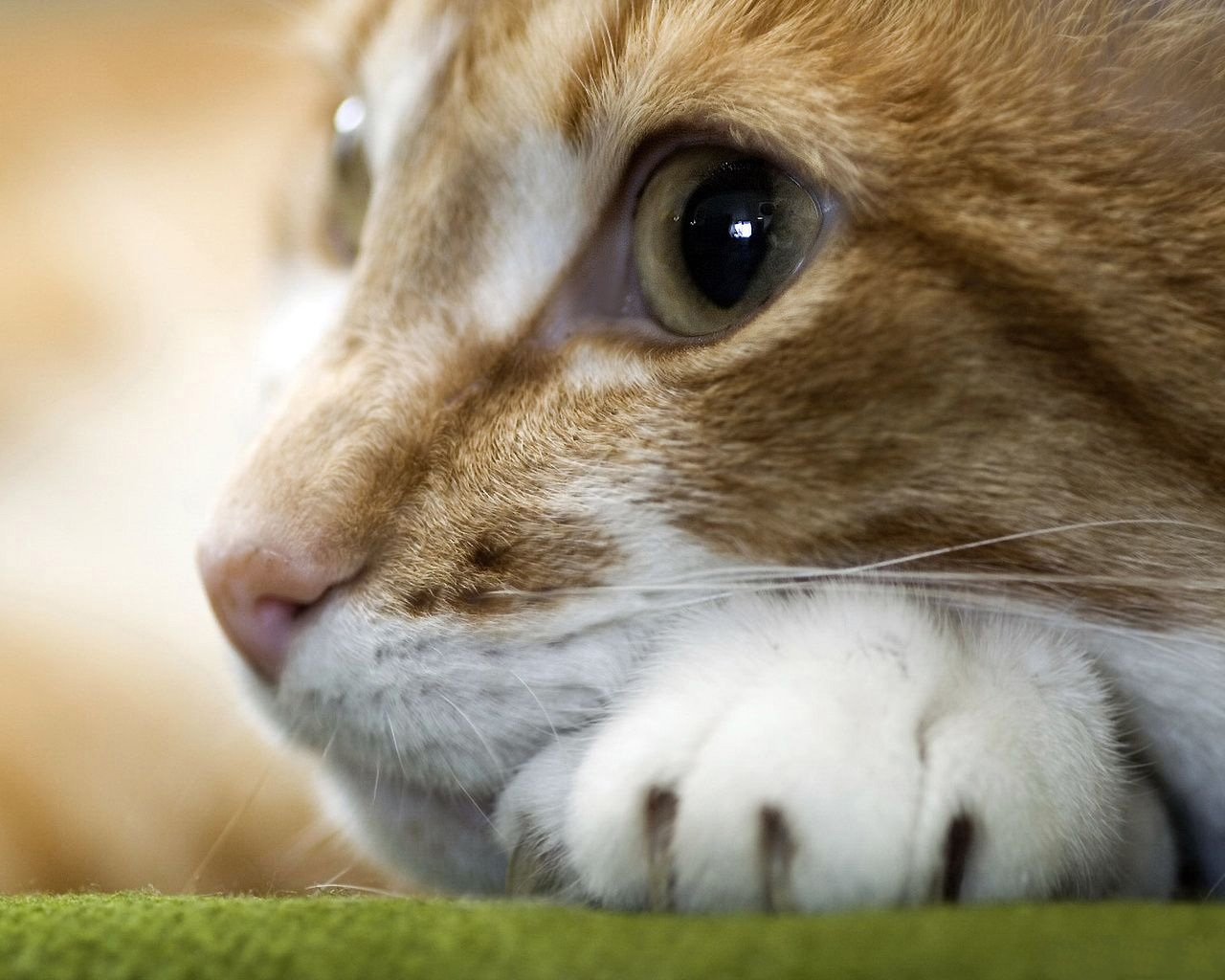8510 download wallpaper Animals, Cats screensavers and pictures for free