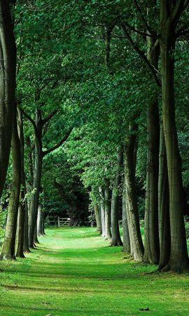 35207 скачать обои Пейзаж, Деревья - заставки и картинки бесплатно