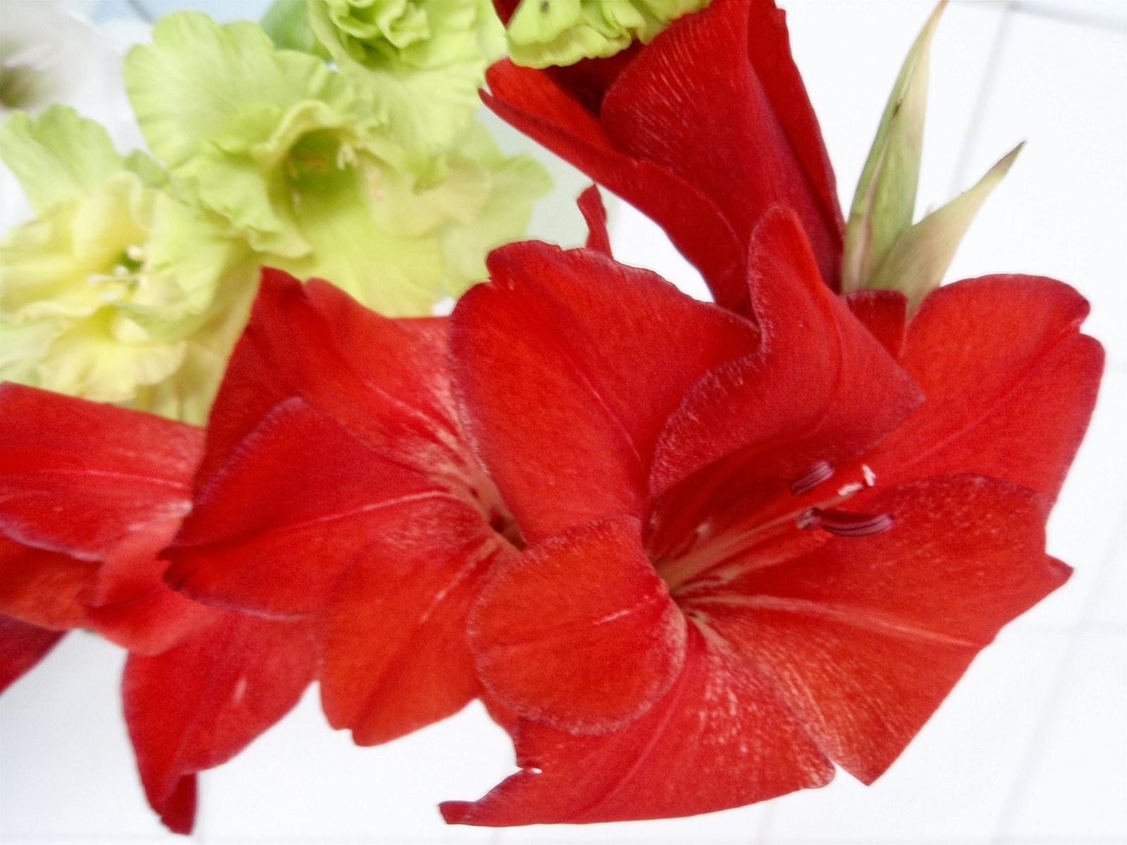 Handy-Wallpaper Pflanzen, Blumen, Lilien kostenlos herunterladen.