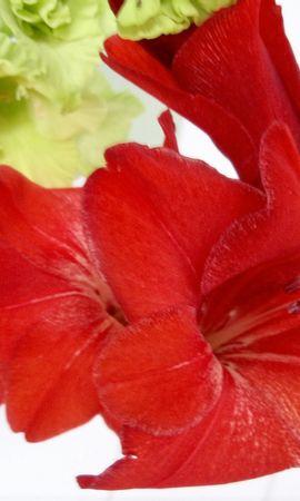 8277 скачать обои Растения, Цветы, Лилии - заставки и картинки бесплатно