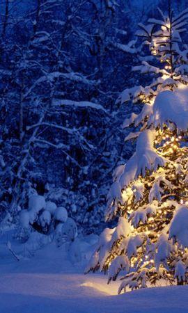 20120 descargar fondo de pantalla Vacaciones, Invierno, Año Nuevo, Nieve, Abetos, Navidad: protectores de pantalla e imágenes gratis