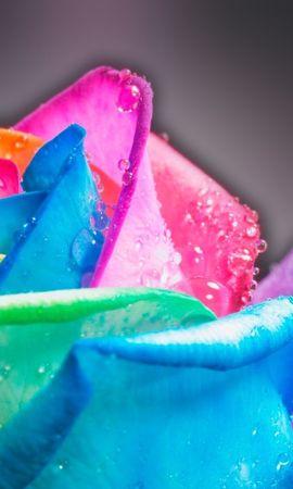 7718 скачать обои Растения, Цветы, Арт, Розы, Радуга - заставки и картинки бесплатно